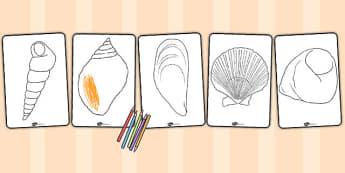 British Seashell Colouring Sheets - british, seashell, colouring