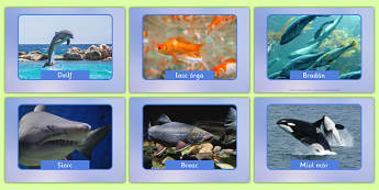 Irish Fish and Sea Creatures Display Photos Gaeilge - roi, irish, gaeilge, vocabulary, display photos, fish, sea creatures
