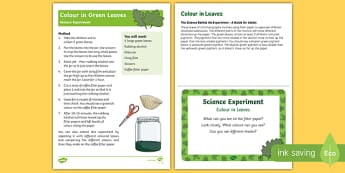 EYFS Colour in Leaves Science Experiment and Prompt Card Pack
