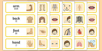 Parts of the Body Topic Words Mandarin Chinese Translation - mandarin chinese, Body parts, my body, nose, eyes, ears, mouth, arm, leg, finger, ourselves, all about me, my body, senses, emotions, family, body, growth, parts of the body