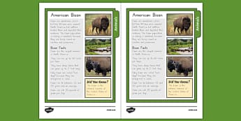 USA Bison Fact Sheet - usa, america, bison, fact sheet, facts, information