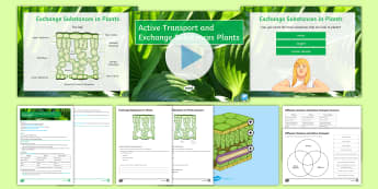 AQA Unit 4.1 Active Transport and Exchange Substances Plants Cover Lesson Pack - Active transport, osmosis, diffusion, venn diagram, membranes, concentration gradients