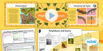 PlanIt - Science Year 5 - Living Things and Their Habitats Lesson 5: Metamorphosis Lesson Pack - amphibian, insect, life cycle