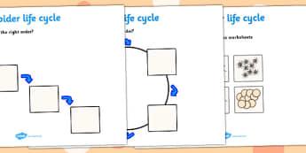 Spider Life Cycle Activity Sheets -  worksheets, worksheet, spider worksheets, spider life cycle, life cycle worksheets, spider, life cycle, minibeasts