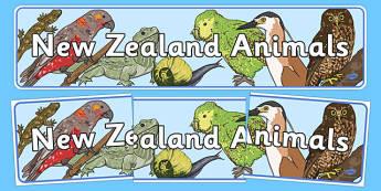New Zealand Animals Display Banner - New Zealand Animals Display Posters, animals, New Zealand, display, poster, banner, sign, kiwi, parakeet, gecko, skink, grey teal, parrot, paradise shelduck