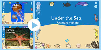 Under The Sea Photo PowerPoint Romanian Translation - bilingual, bilingual, topic, fish