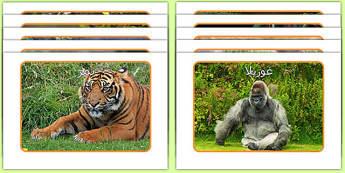 صور عرض حيوانات الغابة