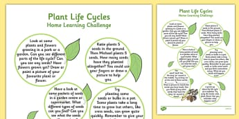 EYFS Plant Life Cycles Home Learning Challenge Sheet Reception FS2 - EYFS, homework, Early years, plants and growth