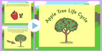 Apple Tree Life Cycle PowerPoint - life cycle, life cycle of an apple tree, plant life cycle, life cycle powerpoint, life cycle video, apple tree