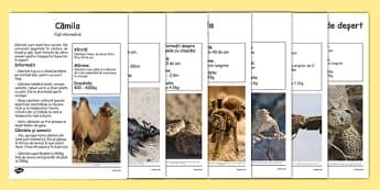 Animale din desert, Planse informative - sarpe, scorpion, camila