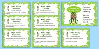 Mrs Nerg Life Processes Characteristics of Living Things Flash Cards - mrs nerg, mrs nerg flash cards, life processes, living things, life cycles, life