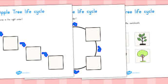 Apple Tree Life Cycle Worksheets - lifecycles, plants, trees