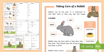 KS1 How to Look After a Rabbit Differentiated Reading Comprehension Activity - Pets, pet, EYFS, KS1, take, care, look, after, family, member, members, vet, vet surgery, surgery, i