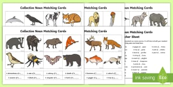 Collective Nouns Matching Cards - collective nouns, collective, noun, animal groups, animal, groups of animals, Australia