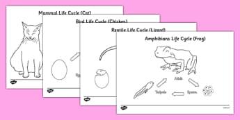 Animal Life Cycles Colouring Sheets - Animal babies, animals and their young, animal life cycles