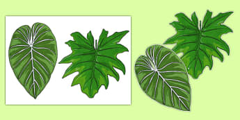 Rainforest Leaves Display Cut Outs - rainforest, leaves, display, cut out