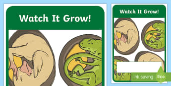 Watch It Grow! Year 2 Biological Sciences Book Cover - Australian Curriculum, biological sciences, primary connections, grade 2, growth, plants, lifecycle,