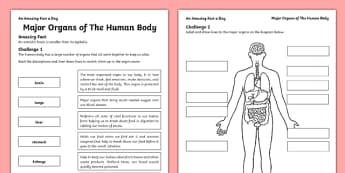 Major Organs of the Human Body Activity Sheet - amazing fact a day, activity, activities, organs, human body, worksheet