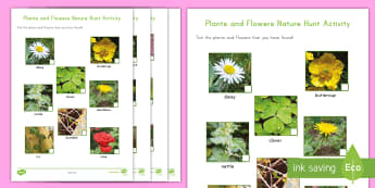 Plants and Flowers Nature Hunt Activity - Plants and flowers nature hunt activity, plants, flowers, nature walk, nature hunt, nature scavenger