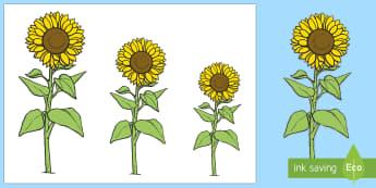 Blodau Haul Gwahanol Uchderau i'w Torri Allan - Blodyn Haul, blodau haul, sunflowers, sunflower, uchder, height.,Welsh, tyfu pethau, plannu