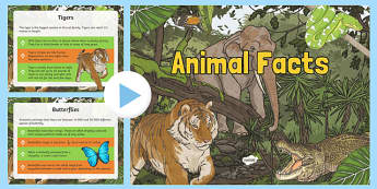 Animal Facts PowerPoint - animals, animal facts, facts about animals, animals powerpoint, animals slideshow, animal factfiles, ks2 animals powerpoint, ks2