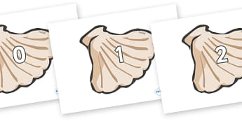 Numbers 0-31 on Sea Shells - 0-31, foundation stage numeracy, Number recognition, Number flashcards, counting, number frieze, Display numbers, number posters