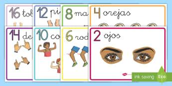 Pósters DIN A4: Contar de 2 en 2 - Las partes del cuerpo - partes del cuerpo, contar de 2 en 2, contar de dos en dos, dos, el cuerpo, pósters, exposición, ex