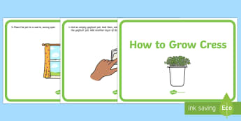 How to Grow Cress Display Posters - How to Grow a Cress Head Display Posters - how to grow a cress head, display, banner, sign, poster,