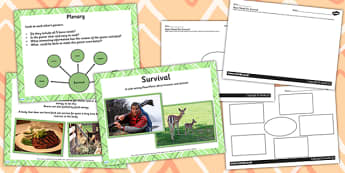 Animals Including Humans Survival Lesson Teaching Pack PowerPoint