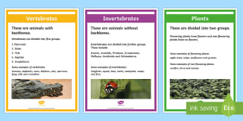 Classify Living Organisms Display Posters - Classify Living Organisms, Vertebrates and Invertebrates Cards - vertebrates and invertebrates, vert