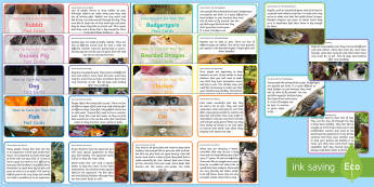 How to Care for Your Pets Fact Cards - EYFS Pets, Animals, National Pet Month, dogs, cats, rabbits, guinea pigs, fish, bearded dragon, rept