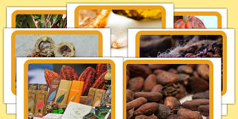 Cacao Bean Photos - cacao beans, cacao, beans, display, photos, display photos
