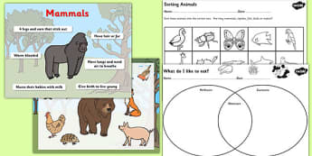 Living Things their Habitats Herbivore or Carnivore Lesson Pack