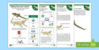 KS1 How to Look After a Lizard Differentiated Fact File - Pets, pet, EYFS, KS1, take, care, look, after, family, member, members, vet, vet surgery, surgery, i