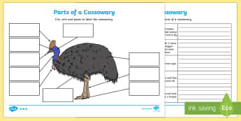 Parts of a Cassowary Activity Sheets - cassowary, Australian animals, animal parts, labeling animals, worksheets, Australian fauna, ACSSU04