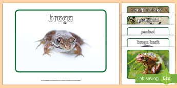 Posteri Arddangos Cylchred Bywyd y Broga - Cylchred bywyd y broga, Cylch bywyd, broga, Broga, Frog, Frog Life cycle, lifecycle, Posteri Arddang