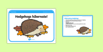 Foundation PE (Reception) Hibernating Hedgehogs Cool-Down Activity Card - physical activity, foundation stage, physical development, games, dance, gymnastics