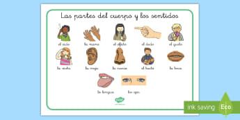 Tapiz de vocabulario: Las partes del cuerpo y los sentidos - tapiz de vocabulario, vocabulario, cuerpo, sentidos, sentido, cuerpo humano, partes del cuerpo, ojos - tapiz de vocabulario, vocabulario, cuerpo, sentidos, sentido, cuerpo humano, partes de