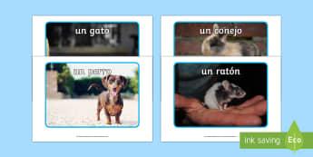 Pets Display Photos - Spanish  - Spanish, Vocabulary, KS2, animals, pets, display, posters, photos, classroom, organisation,Spanish