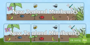 New Zealand Minibeasts Display Banner - New Zealand, minibeasts, insects, bugs, minibeast, year 1, year 2, year 3, science, nature, living w