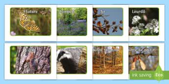 Viețuitoarele pădurilor  Fotografii de afișat - t-ad-041-woodland-creatures-and-natural-objects-photo-pack  Fotografii de afișat, pădurea, viețui