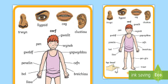 My Body Display Posters Welsh - Welsh Second Language Display Resources, Welsh Display, Welsh,Welsh