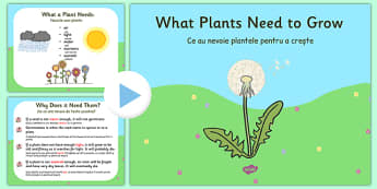 What Plants Need to Grow PowerPoint Romanian Translation - romanian, plants, living things, what plants need to grow ks2, what do plants need to grow, things plants need to grow, growth