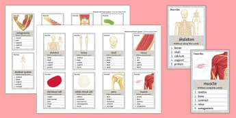 Skeletal and Muscle Systems Can You Guess? Cards - Skeleton, Skeletal, Muscle, Systems, Bones