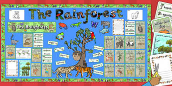 Ready Made Rainforest Display Pack - ready made, rainforest, pack