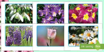 Frühlingsblumen Foto Poster DIN A4 - Frühling, Spring, Frühlblüher, Pflanzen, Blumen,German.
