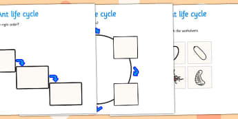 Ant Life Cycle Worksheets -  worksheets, worksheet, ant worksheets, life cycle worksheets, ants, ant, life cycle, ant life cycle, minibeast worksheets