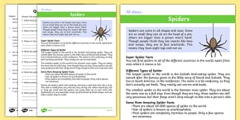 Spiders Differentiated Reading Comprehension Activity