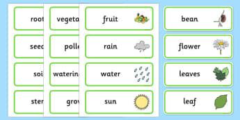 Plant and Growth Topic Word Cards - Plant, Growth, Word Card, Topic, Foundation stage, knowledge and understanding of the world, investigation, living things