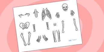 Skeleton Cut Out - skeleton, cut out, cut outs, cutting, cut outs, cut-outs, cutouts, display cutouts, images, pictures, display pictures, display images